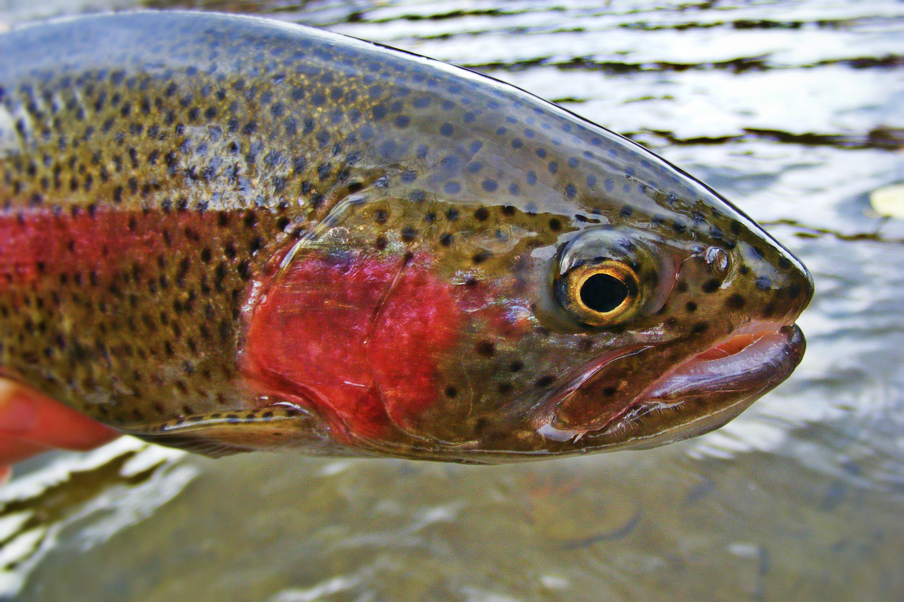 The deerfield river part ii waking up water for Deerfield river fly fishing