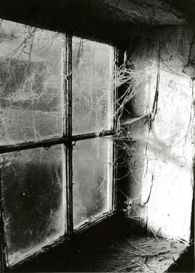 Spider Web on Window