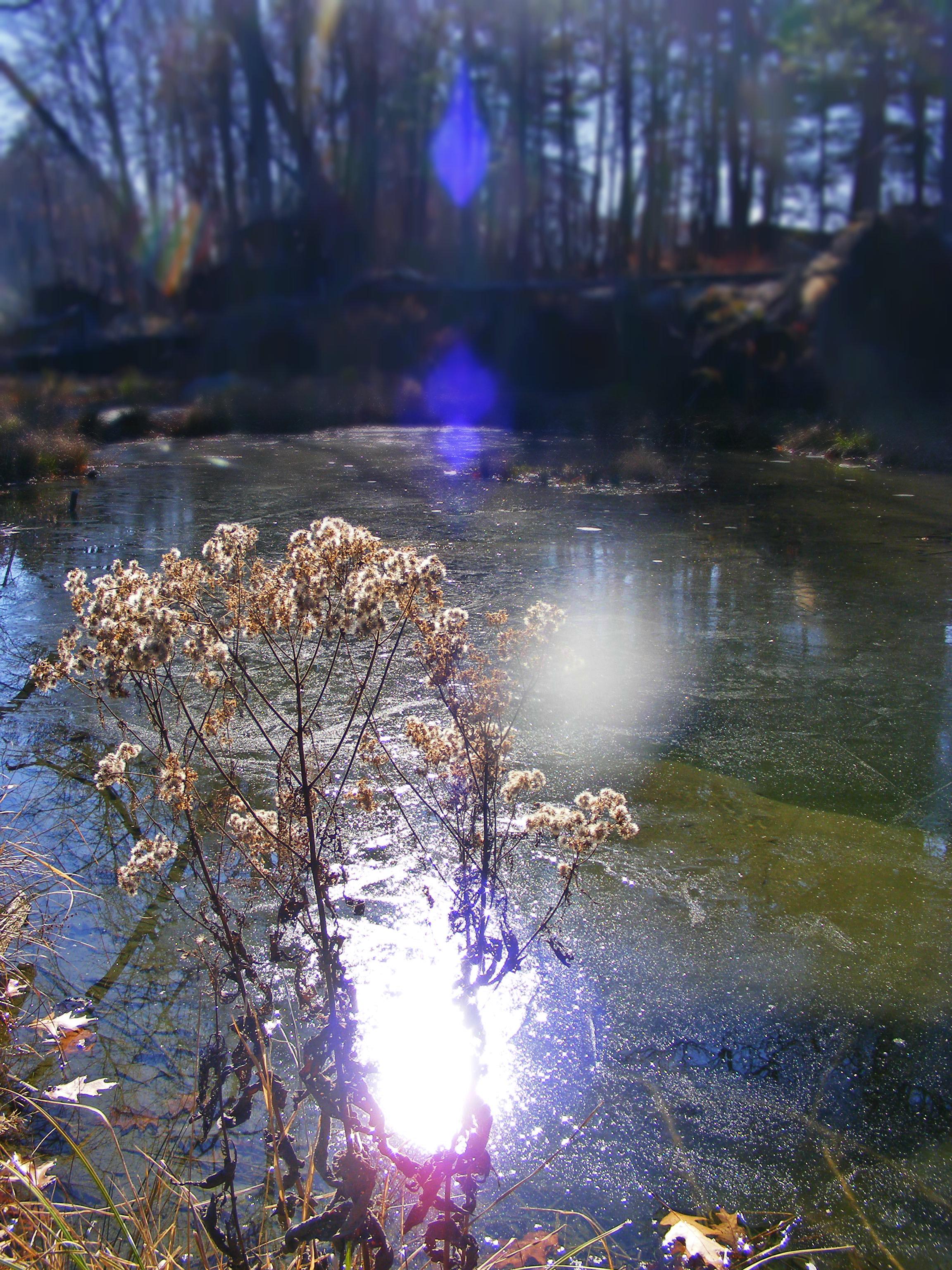 Deerfield river brown trout for Deerfield river fly fishing