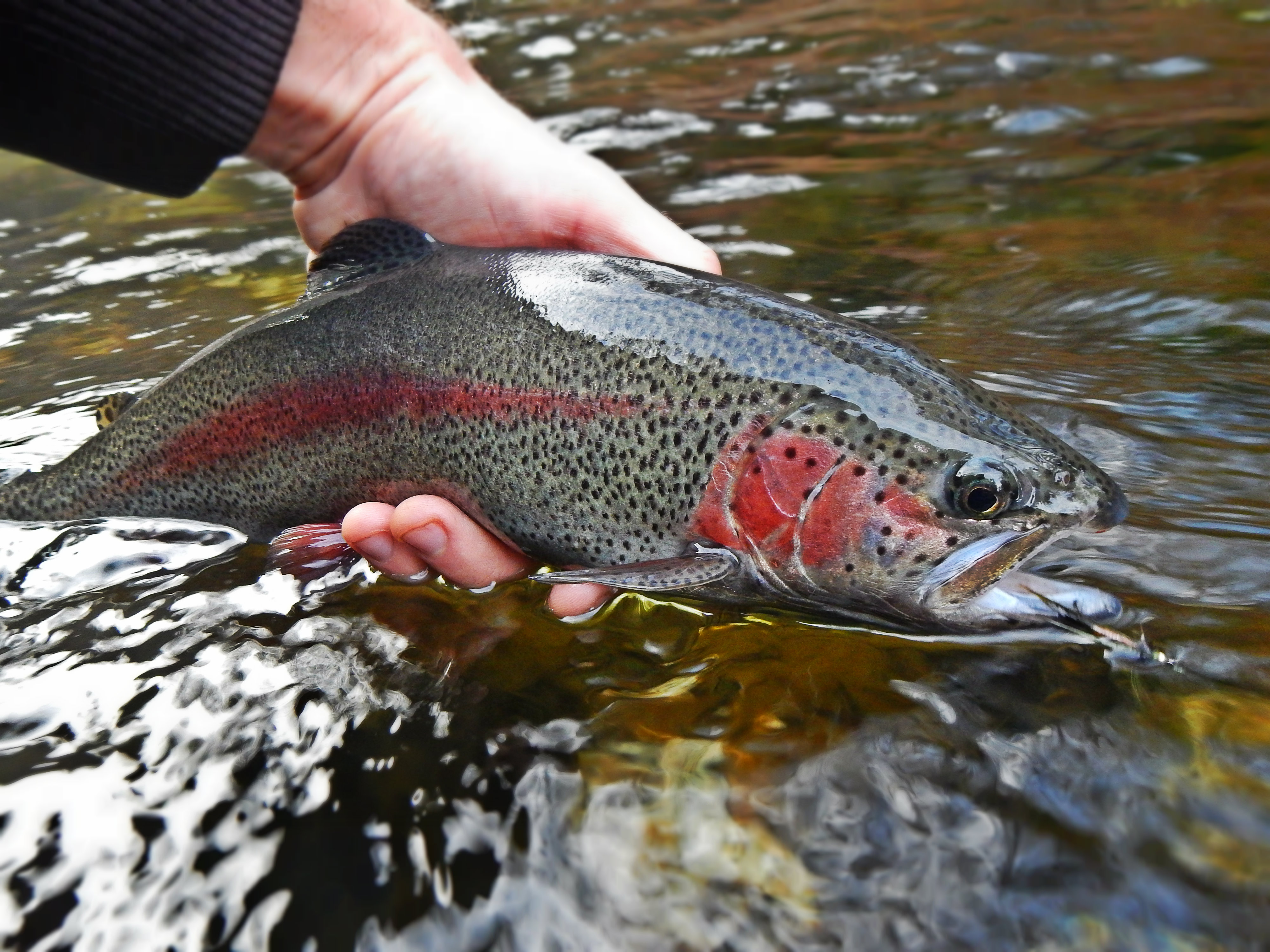 Swift river update for Swift river fly fishing