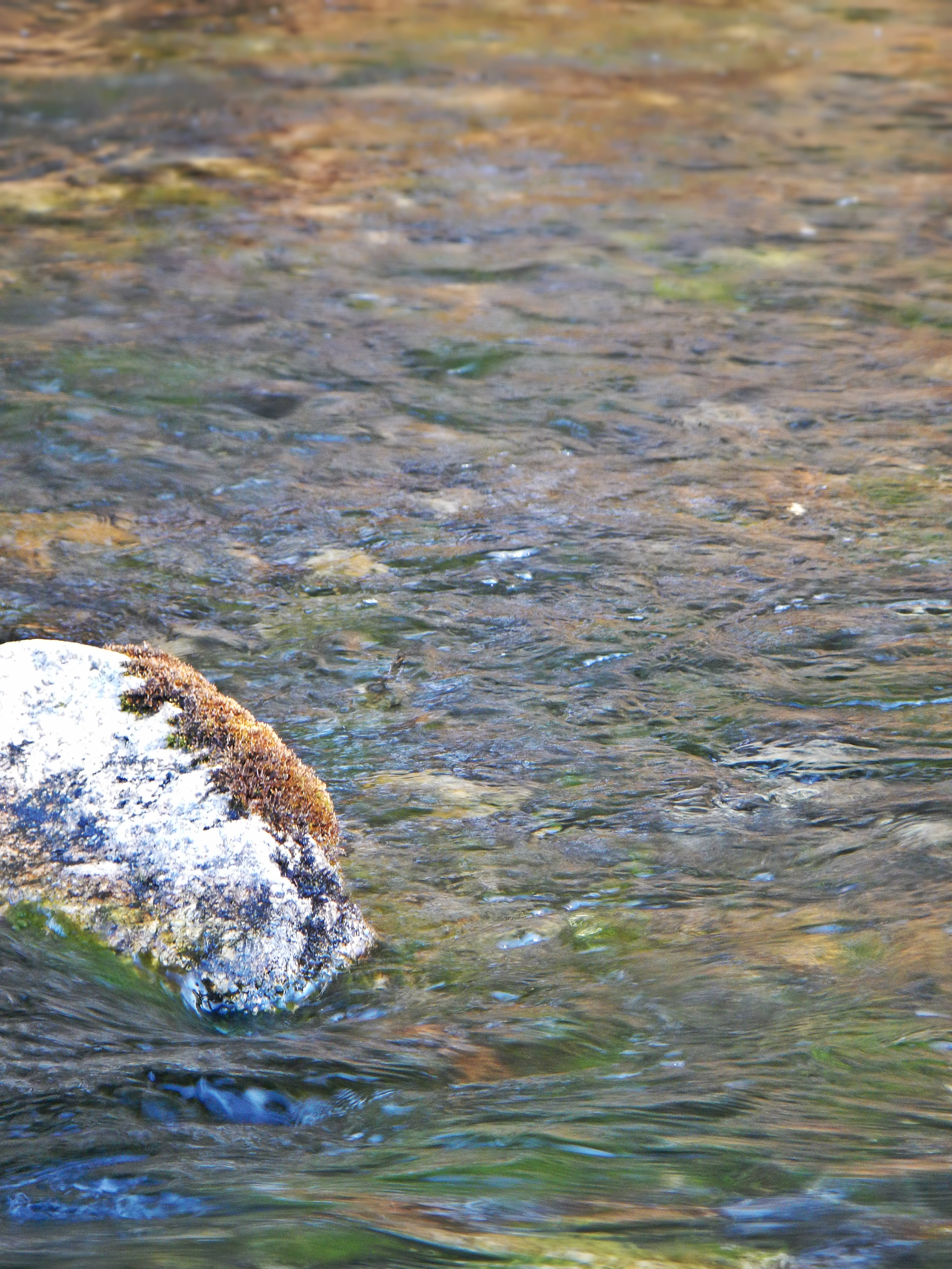 Late january on the swift river for Swift river fly fishing