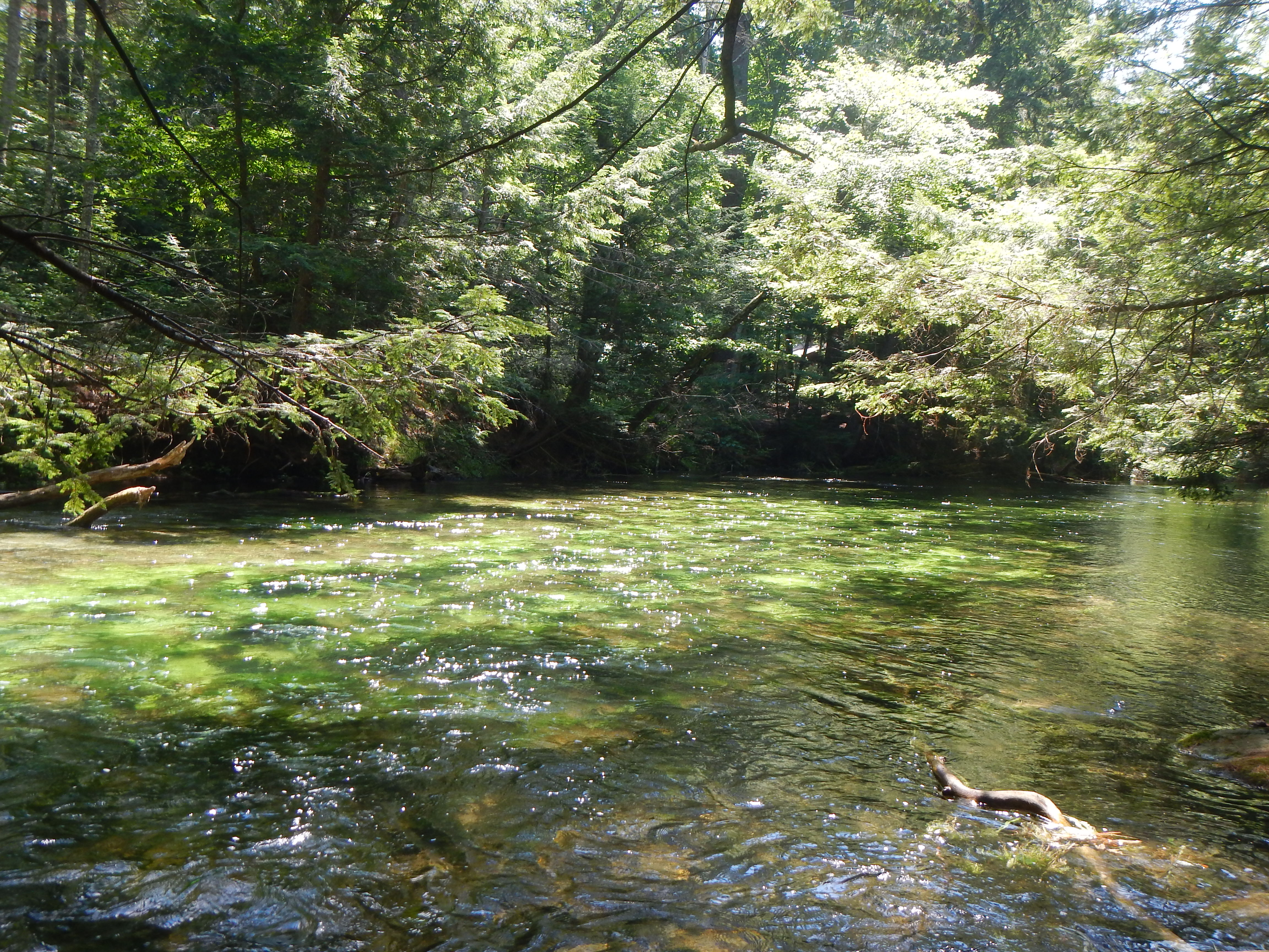Dry fly fishing for Swift river fly fishing