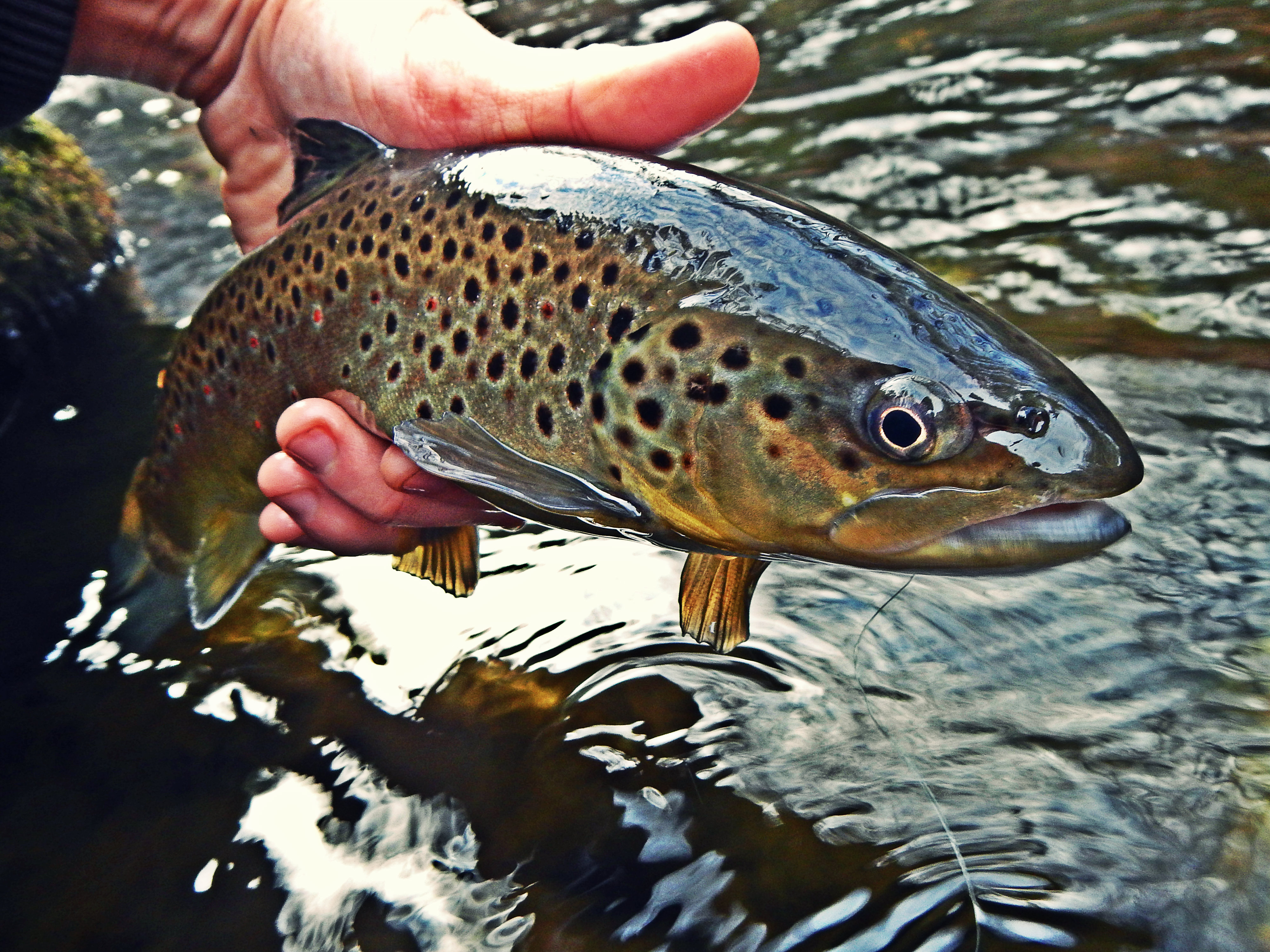 Winter fly fishing ready go for Winter trout fishing