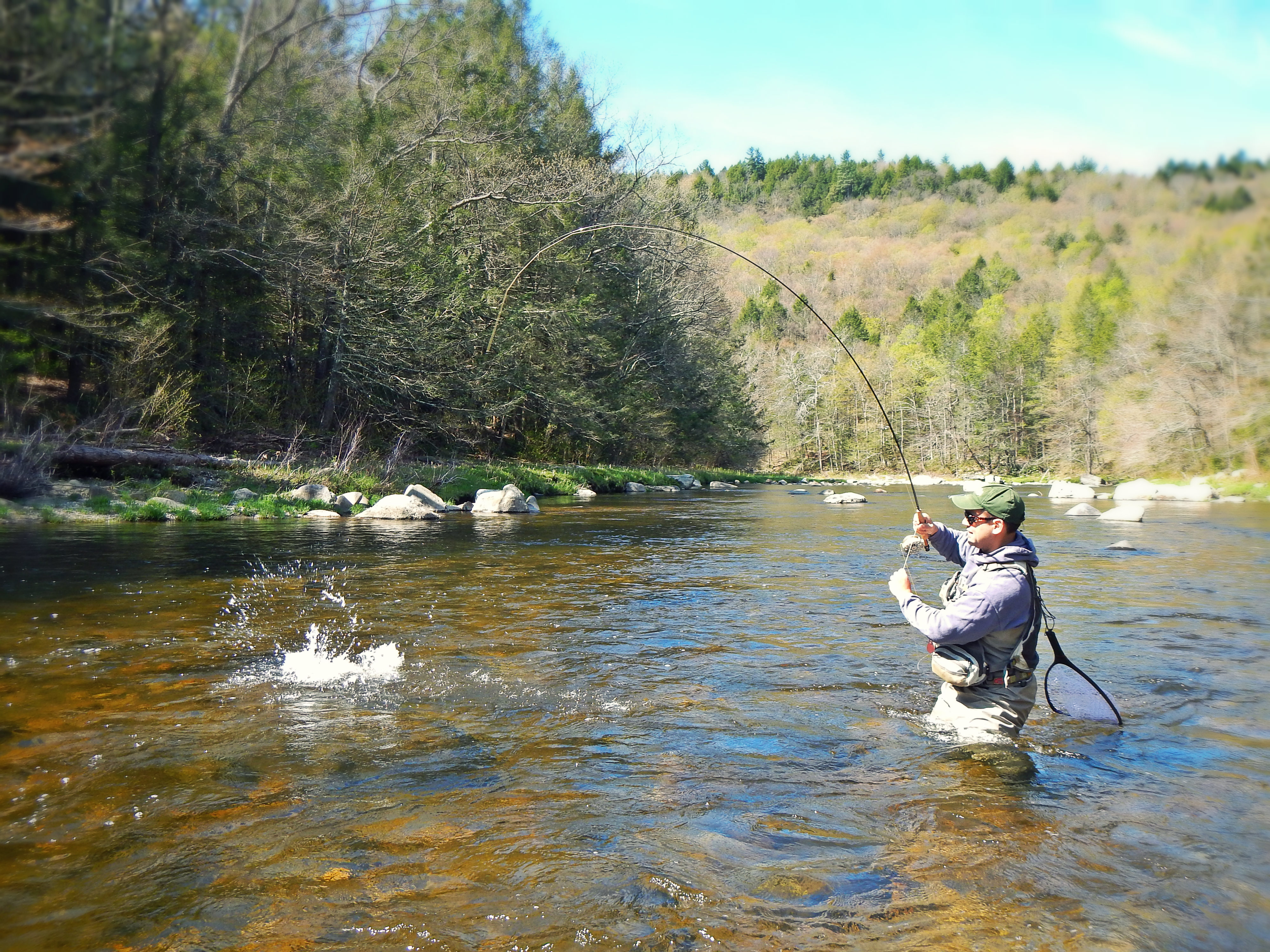 Trout for Fly fishing massachusetts